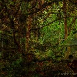 Bewerking: Forest with hidden secrets
