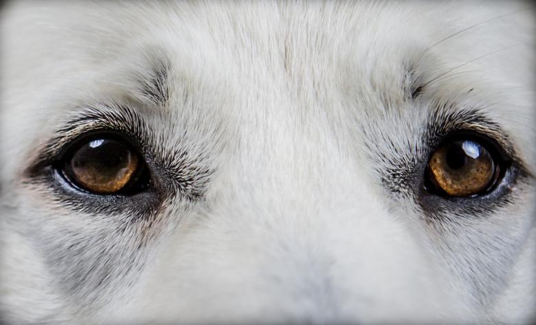 ziel spiegel - de ogen zijn de spiegel van de ziel
