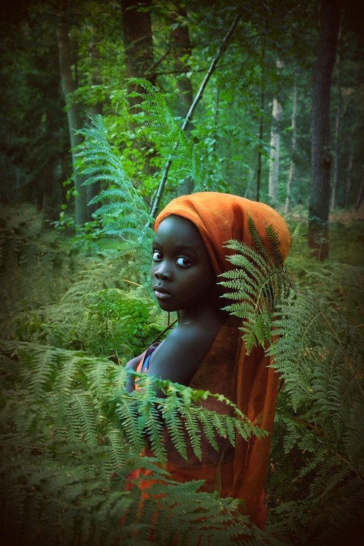 African Forest -