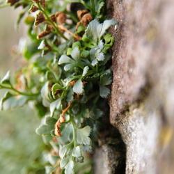 Plantje uit de muur