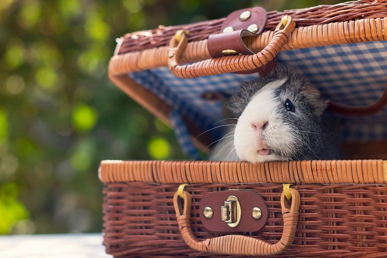 """Pignic time! - Ik vrees dat Mieps alles al heeft opgegeten voor de picknick.. <img  src=""""/images/smileys/sad.png""""/>"""