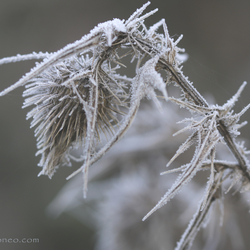 Frosty spikes