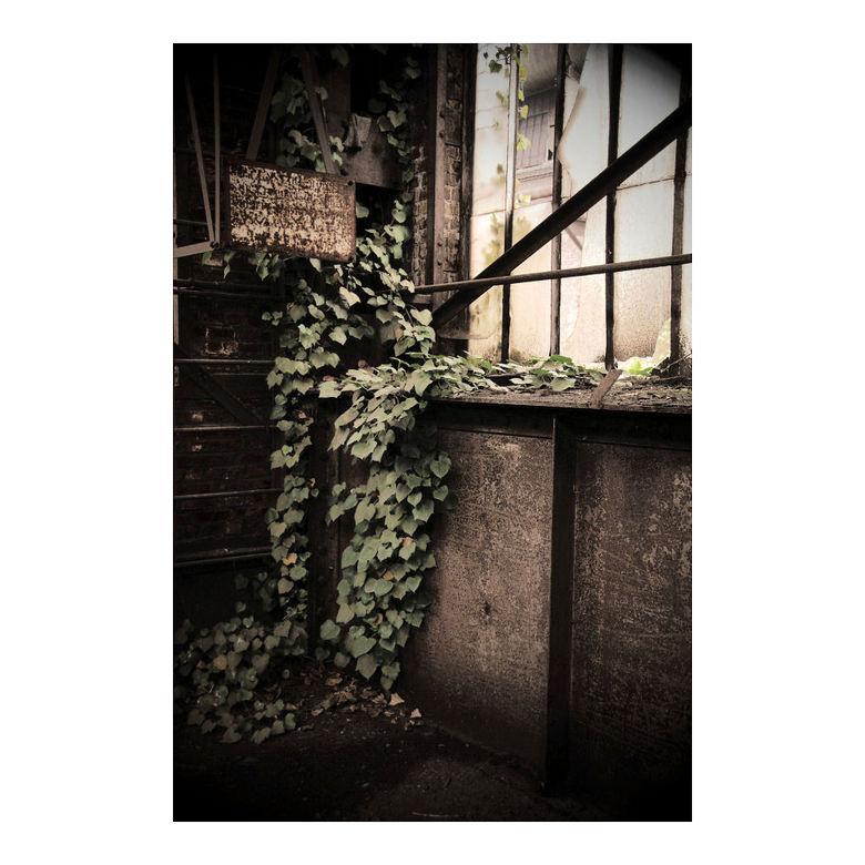 Growing by ST-Steel - Altijd mooi om te zien hoe oude gebouwen weer terug genomen worden door de natuur.<br /> <br /> Alle bedankt voor de recties o