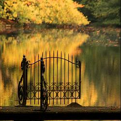gouden herfst impressie..