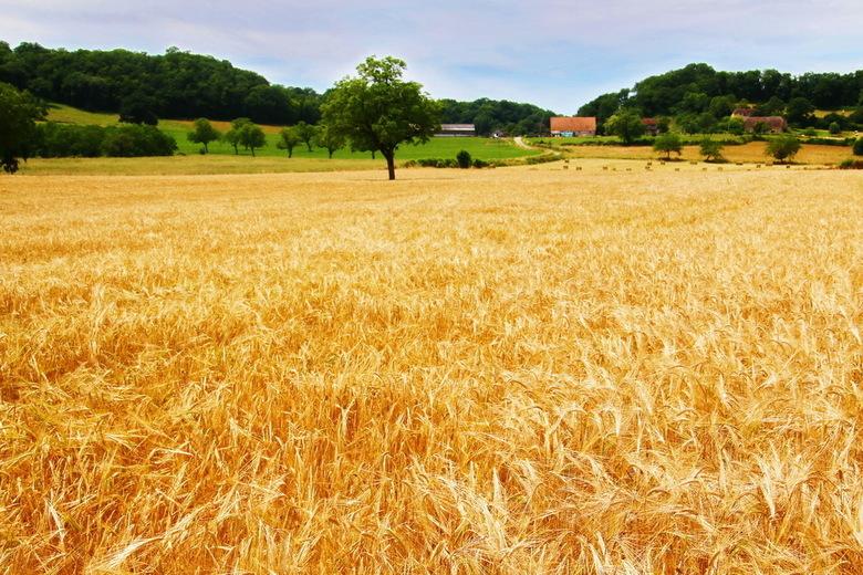 Nieuwe oogst -1- -