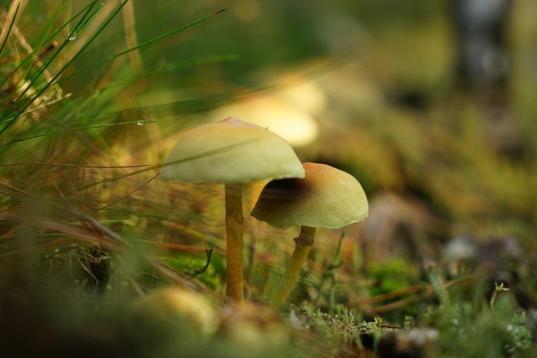 Sfeertje - Heerlijk zonnetje in het bos.<br /> Genieten van de herfst