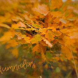 Nog steeds prachtige herfstkleuren