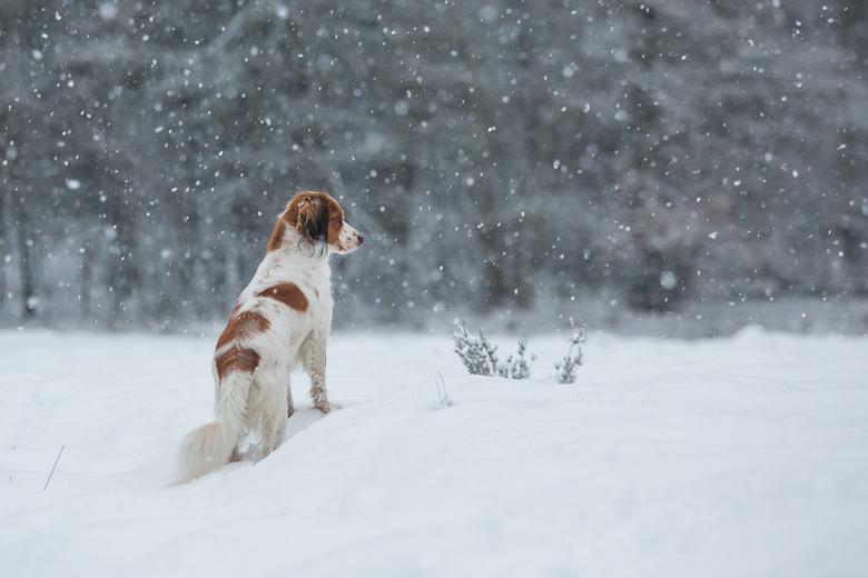 Het sneeuwt - Even pauzeren en genieten