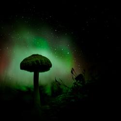 Paddenstoel in het noorderlicht