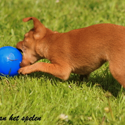playing with the blue ball