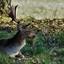 Hert (3)