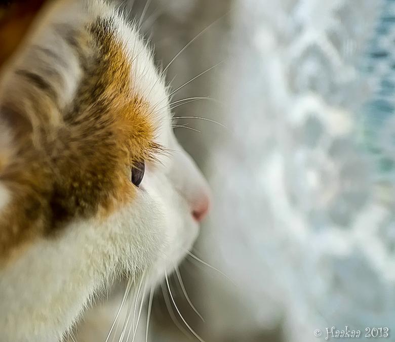 Aandachtig - Een foto van Fleur, die als een standbeeldje heel stil en aandachtig naar buiten zat te kijken. Het ging me om de scherpte op het oog en