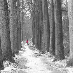 'Walking the Dog'...