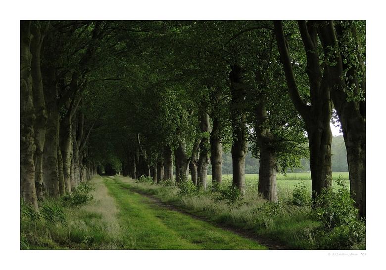 Long Old Lane - Een lange, oude laan vlakbij landgoed IJsselvliedt bij Wezep. Dankzij het bladerdek had ik geen last van de regen.<br /> <br /> Gr A