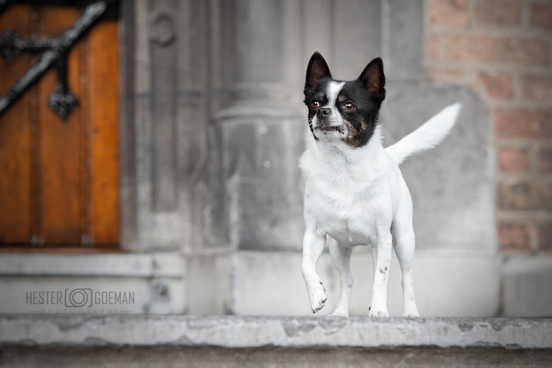 Citydog.... - Even een keer een totaal andere locatie. Vanochtend met dit mooie model naar het Binnenhof geweest om te fotograferen.