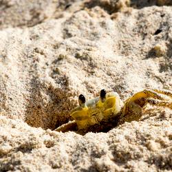 Schuw krabbetje