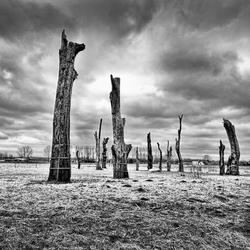 DEAD TREE VALLEY