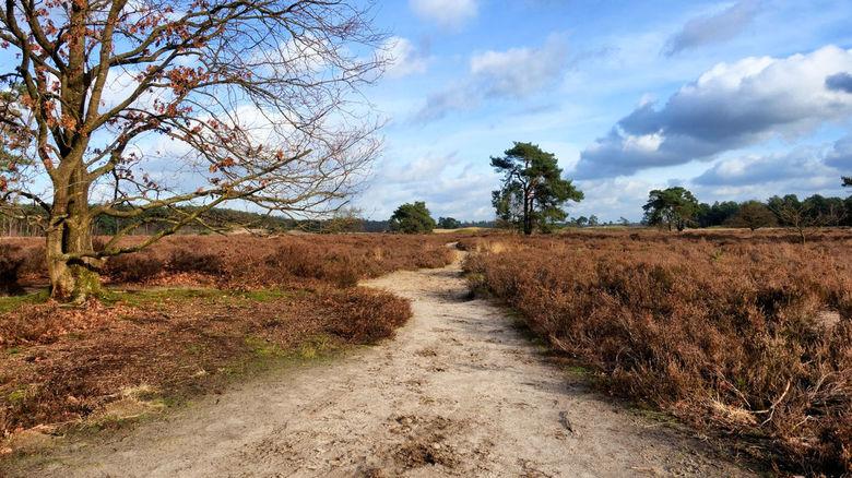 Loonse en Drunense duinen - Gisteren tijdens mijn fietstocht de andere kant opgereden. Ca 3 km van huis.