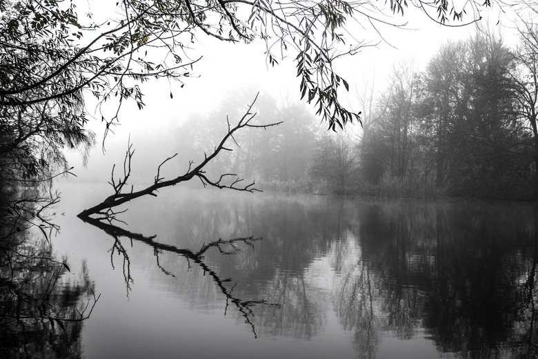 Mistige ochtend - Deze foto heb ik gemaakt op een mistige ochtend hier vlakbij in het bos. Ik kan echter geen keuze maken of ik hem in zwart wit moet