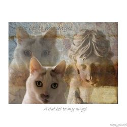 A cat bel to my angel