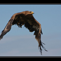 Fly away,
