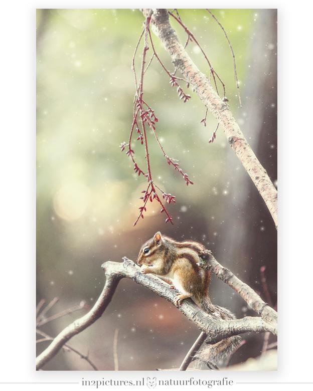 Hello December... - Dit kleine beestje ligt inmiddels vast al heerlijk in zijn winterslaap. Deze foto schoot ik dan ook aan het einde van de zomer. Do
