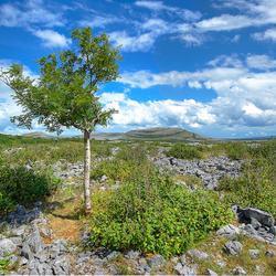 de Burren Ierland