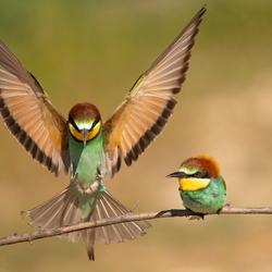 Aanvliegen