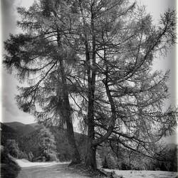road en trees Austria b&w
