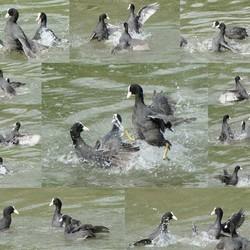 collage van een vogel strijd