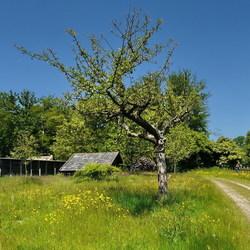 Land en Bosch.