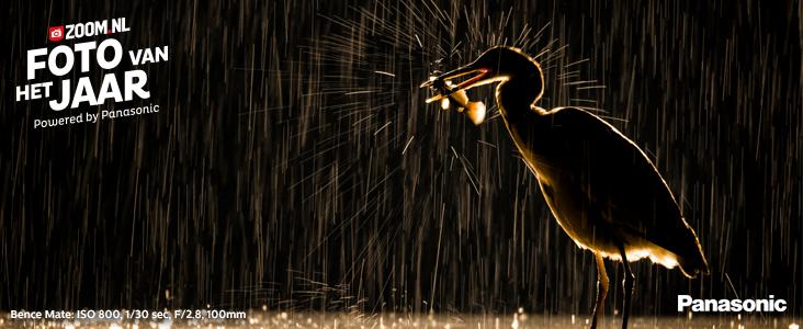 fotowedstrijd: Foto van het jaar: Natuur