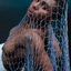 mermaid in fishing net