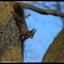 Eekhoorn in de boom