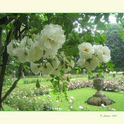 In de tuin van....