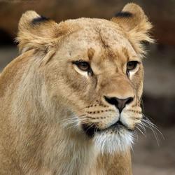mevr. de Leeuw