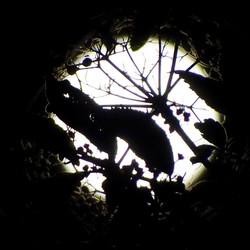zie de maan