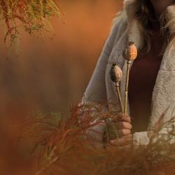Herfst sfeerplaat met gedroogde klaproos zaaddozen