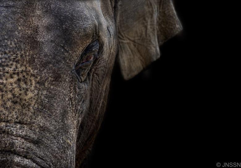 Olifant - Voor de eerste keer een 'dark animal' portret gemaakt. En ik ben best tevreden. Tips en feedback zijn natuurlijk welkom!