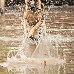 Herder in water
