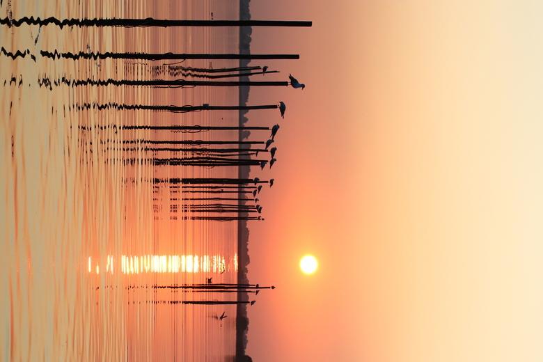 Komkefiskerij - Visserij netten in t water tijdens zonsondergang. De vogels maken er slim  gebruik van.