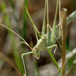 Klein groen vriendje