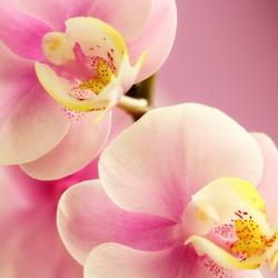orchideetje