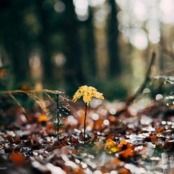 Kleine herfst