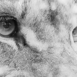 Animals-13