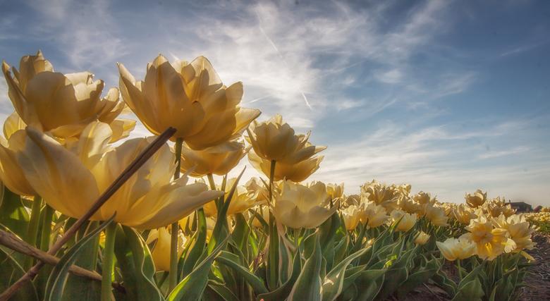 """Morning Greetings - Als Hollander ben je toch een beetje verplicht om wat bloemen foto&#039;s in je portfolio te hebben <img  src=""""/images/smileys/smi"""