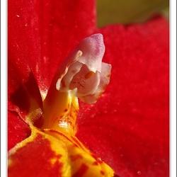 Orchidee maar dan anders.