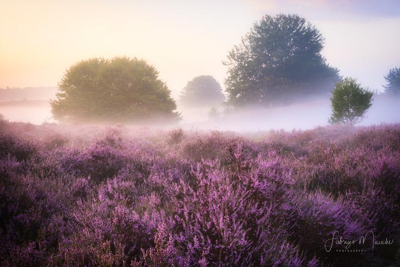 purple at sunrise