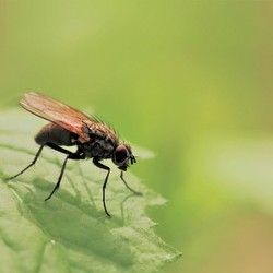 Another fly