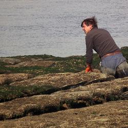 Oesterkweker in Bretagne
